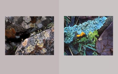 Lichen Elements 31 and 32