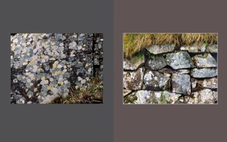 Lichen Elements 29 and 30