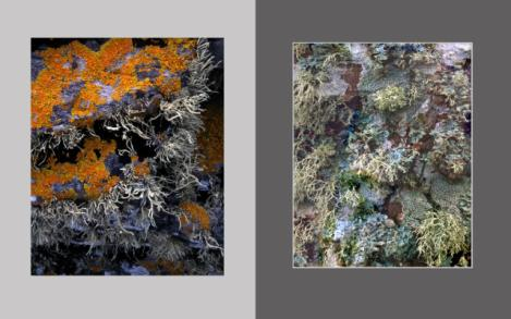 Lichen Elements 1 and 2