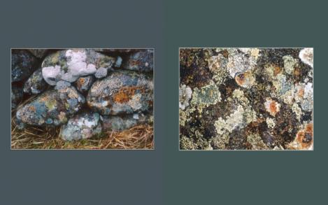 Lichen Elements 33 and 34