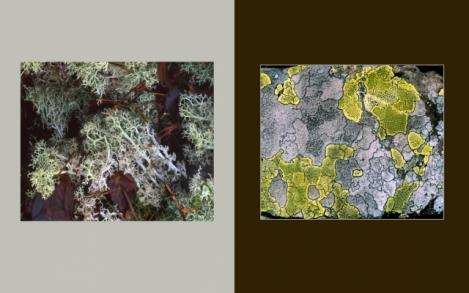 Lichen Elements 3 and 4