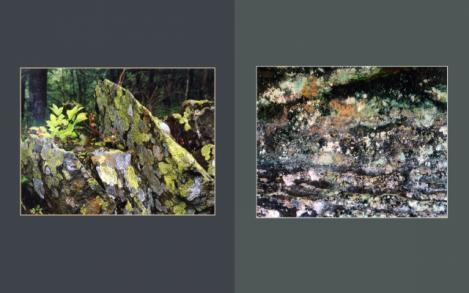 Lichen Elements 23 and 24