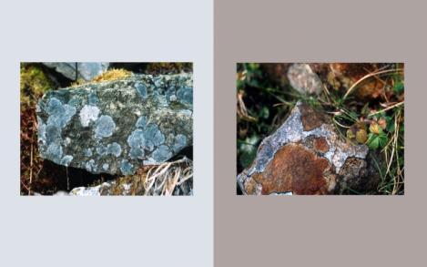 Lichen Elements 9 and 10