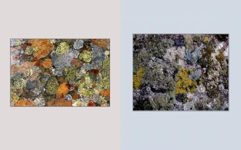 Lichen Elements 17 and 18