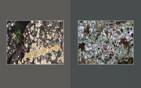 Lichen Elements 21 and 22
