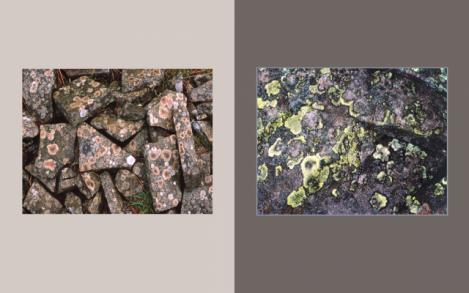 Lichen Elements 15 and 16