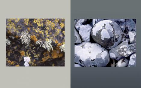 Lichen Elements 19 and 20