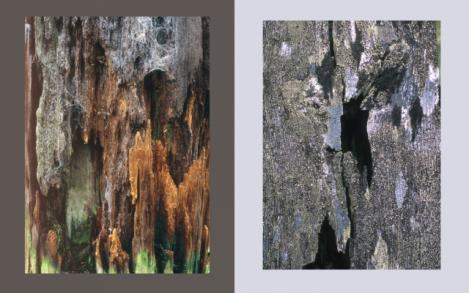 Wood Elements 7 and 8